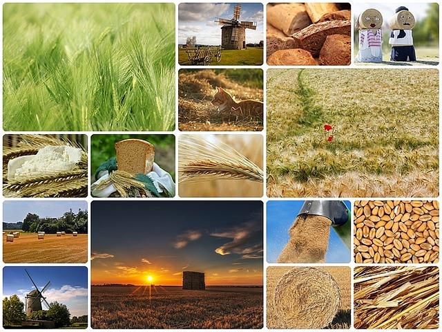 Las muchas características de las máquinas de pan